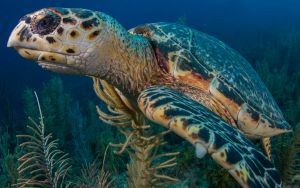 Turtle 7