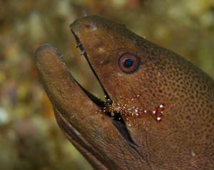 1-31shrimp.jpg