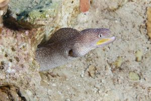 Cool Eel