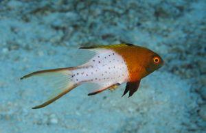 Cool Fish