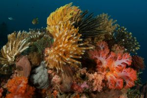 Colorful Feather Stars and Coral