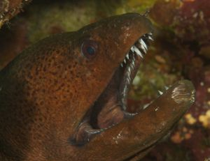 Moray Teeth