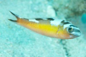 Tabaccofish