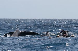 Group with Whale Tail