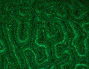 UV Brain Coral