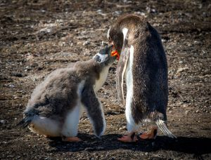 Penguin Feeding.jpg