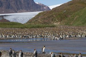 Penguins at the bottom of the glacier.jpg
