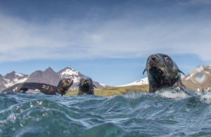 Seals from water